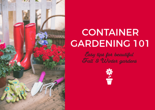 Container Gardening 101